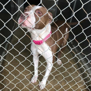 Dogs To Adopt In Lorain County